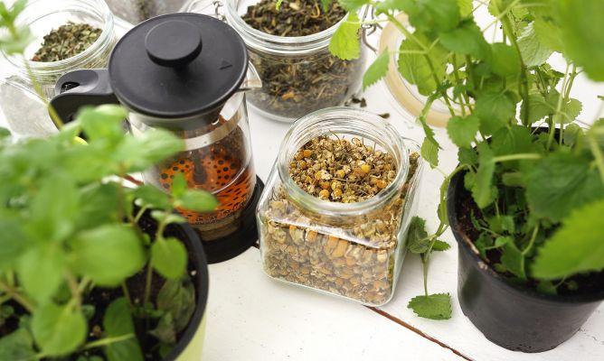 Medicina Natural: 7 plantas que debes conocer