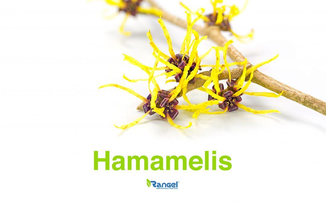 HAMAMELIS.